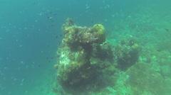 Coral reef snorkling n Philippines Stock Footage