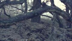 Forest fire. Fire in a wood. Disastrous consequences of forest fires. Stock Footage