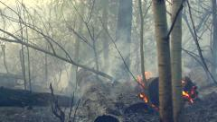 Fire in a wood. Disastrous consequences of forest fires. Mysterious background - stock footage