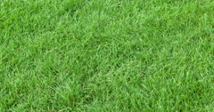 Green grass in Jubelpark Stock Footage