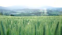 Camera slide:wheat field Stock Footage