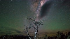 Milky Way Above Beautiful Single Tree, Timelapse Pan Up Stock Footage