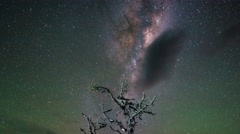 Milky Way Above Beautiful Single Tree, Timelapse Zoom Out Stock Footage