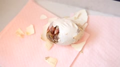 Zipping egg of a newborn chick being born Stock Footage