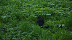 Young female cat in the grass walking, prores hq footage Stock Footage