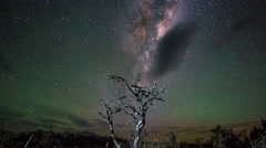 Milky Way Above Beautiful Single Tree, Timelapse  Arkistovideo