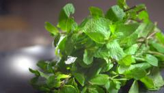 Fresh mint over dark background. Peppermint  - stock footage