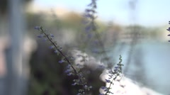 Blade of grass in the wind Stock Footage