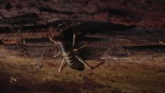 Weta crawling into tree trunk nook. Stock Footage