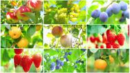 Stock Video Footage of Harvest concept collage.