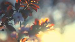 Spring flowers. Beautiful orchard. Abstract blurred background Stock Footage