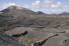 Landscape Lanzarote Spain Volcano Grape Vine Field Kuvituskuvat