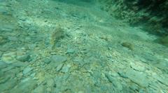 Fish: Scuba Diving in clear Gozo sea water Malta Stock Footage