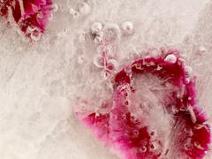 Frozen beautiful abstraction Stock Photos