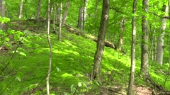 Green ground cover on hill in the forest scenic Stock Footage