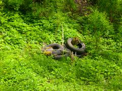 Scrap tyres in the nature Stock Photos