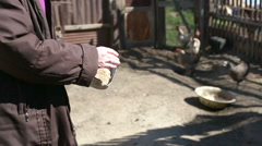 Woman feeding chickens Stock Footage