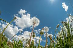 View Of Clouds In The Sky Through The Green Grass - stock photo