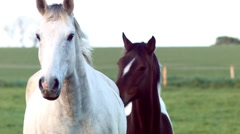 IRISH HORSES - stock footage