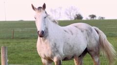 IRISH HORSES Stock Footage