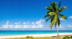 Beach with high palm tree, Caribbean Islands Stock Photos
