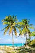 Sandy beach with palm trees, Caribbean Islands Stock Photos