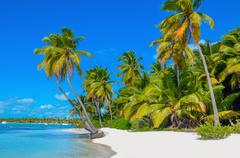 Caribbean beach with white sand and palm trees Stock Photos