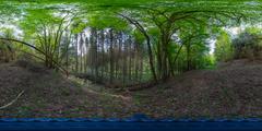 European Forest 2 Spherical Panorama Stock Photos