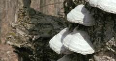 Wild mushroom 2K Stock Footage