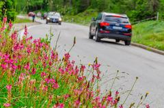 Flower field and car - stock photo