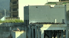Birds Sit on a Deserted Foundation on the Bay Stock Footage