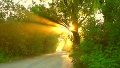 Beautiful view of road through the green wood Stock Footage