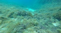 Underwater clear Gozo sea water Malta Stock Footage