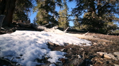 Motion Control Time Lapse of Ground Snow in Alpine Forest Daytime -Zoom In- Stock Footage