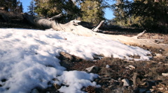 Motion Control Time Lapse of Ground Snow in Alpine Forest Daytime -Zoom Out- Stock Footage