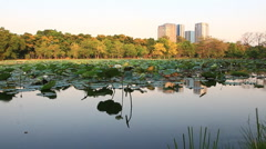 The park and lotus pond in the city,Bangkok Thailand Footage Stock Footage