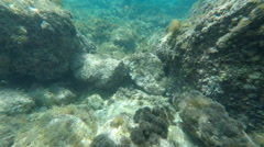 Following a fish whilst Scuba Diving in clear Gozo sea water Malta Stock Footage