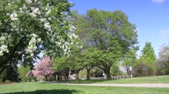 Niagara Parkway Spring Flowering Trees Stock Footage
