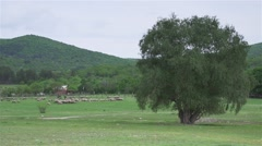 A flock of sheep in a green meadow near a big tree Stock Footage