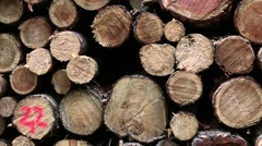 Pile of cut wood in the forest Stock Footage