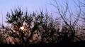 Sky  sunset sky through dark trees. Time lapse Footage