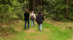 Walkers in the forest in Saxon Switzerland Stock Footage