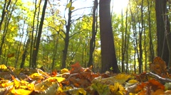 Autumn dry leaves falling on ground in autumn park Stock Footage