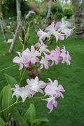 Maldives Flowers Plants Island Tropical Tropic - stock photo