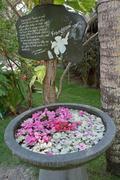 Maldives Beach Landscape Flowers Frangipani Tropical Tropic - stock photo