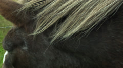 Woman Pets an Icelandic Horse Mane Stock Footage