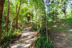 Path in the shady green garden Stock Photos