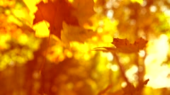Falling autumn leaves over yellow autumnal background Stock Footage