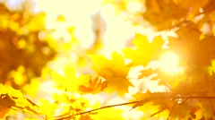 Autumn. Yellow blurred fall autumnal background Stock Footage