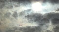 Sapling, sky, sun Stock Footage